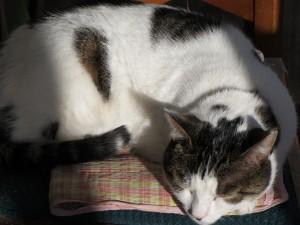 Ping snoozing sunshine