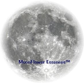Full Moon Enviromental Essence